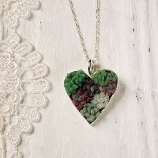 succulents in a heart