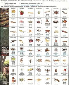 insect-identification-chart