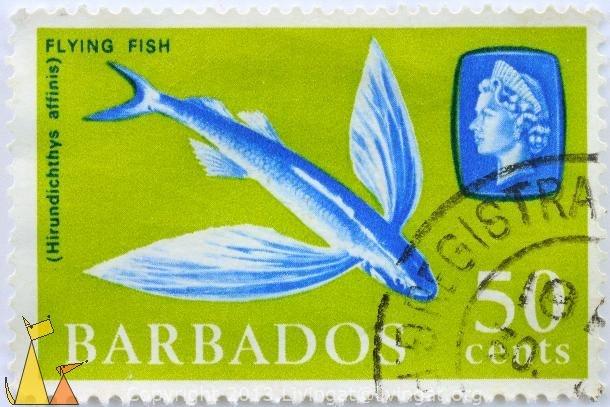 Barbados Flying Fish