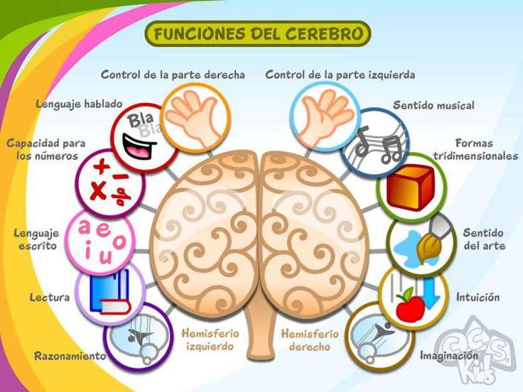 Hemisferios del cerebro humano y habilidades.