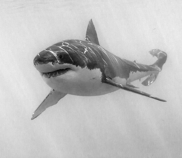 Fantastisch Tolle Weiße Hai Bilder Zum Ausmalen Bilder - Beispiel ...