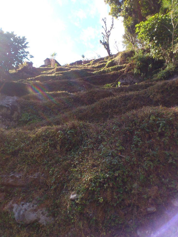 terrace fields in Ghandruk #trekking #Gurung #village #Ghandruk #Ghandrung #hospital #travel