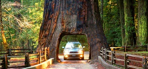 Near the intersection of U.S. 101 and California's Highway 1, drivers can pass (for a fee) through this vintage marvel in Leggett: the Chandelier Drive-Through Tree, carved in the 1930s and positioned conveniently close to the 31-mile, redwood-rich Avenue of the Giants paralleling U.S. 101.