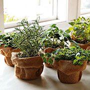 Coltivare le erbe aromatiche in vaso? Puoi farlo anche in casa!progettazione giardini - realizzazione giardini - Vivai Loda - Cellatica (Brescia) - paesaggista - progettazione giardini