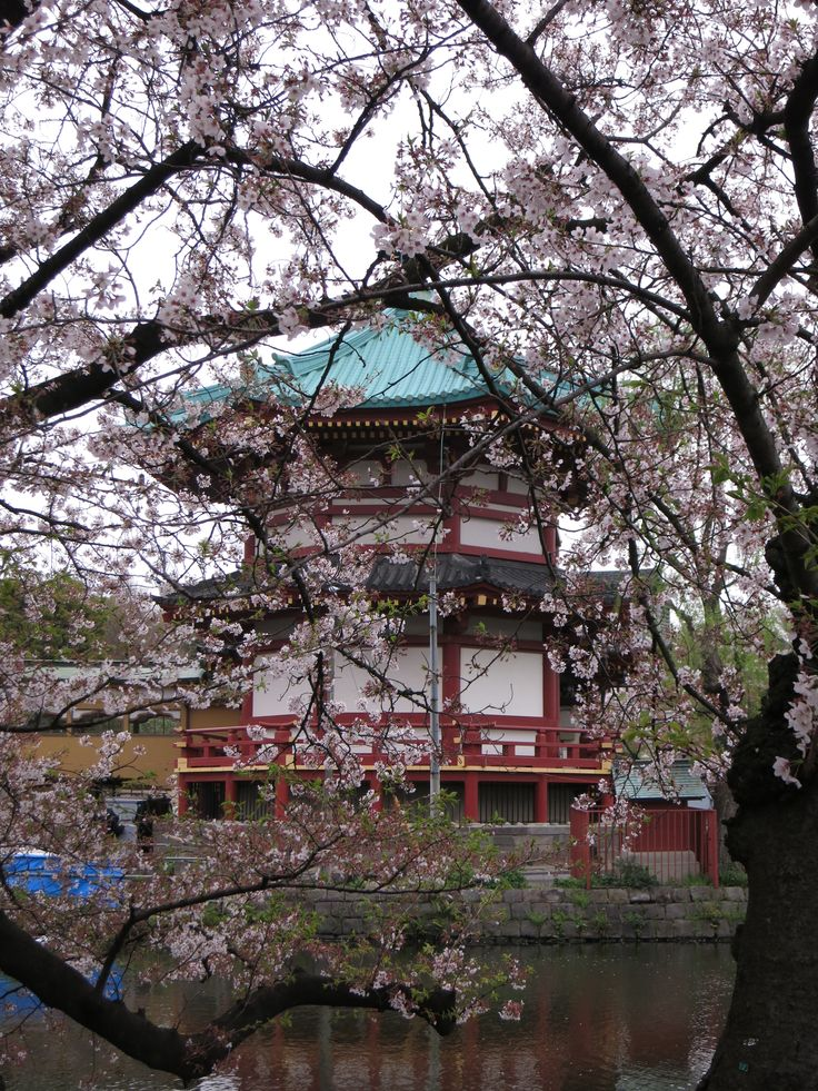 Il piccolo #tempio nel mezzo del laghetto del parco di #Ueno, a #Tokyo, #Giappone http://viaggigiappone.animeclick.it