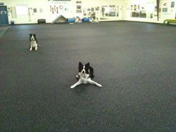 Dog Agility Surface - Rubber Dog Flooring