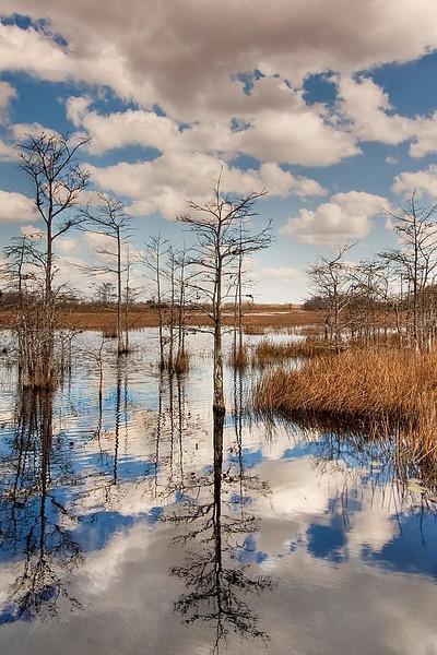 Grassy Waters, West Palm Beach, FL