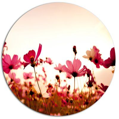 """DesignArt 'Cosmos Flowers on Pink Background' Photographic Print on Metal Size: 38"""" H x 38"""" W x 1"""" D"""
