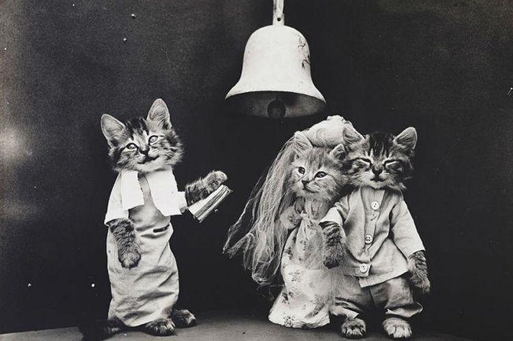24 fotos graciosas de gatos que seguro que te van a encantar y compartir con tus amigos..