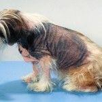 Canine Atopic Dermatitis Treatment