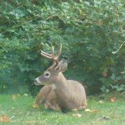 Homemade Deer Feed   eHow