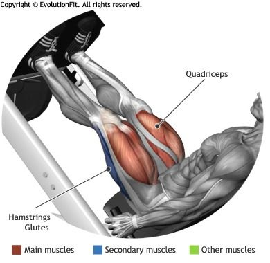 QUADRICEPS -  LEG PRESS 45°