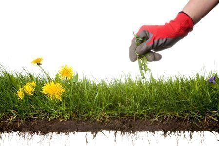 Come eliminare le erbe infestanti e le erbacce con metodi naturali e con i diserbanti, quest'ultimi sono sconsigliati per il loro impatto sull'ambiente.