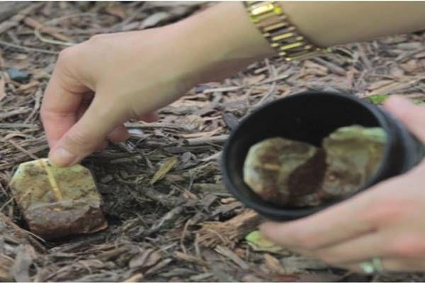 használt tea filter elültetése