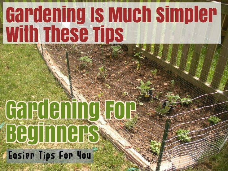 Grow A Lovely Organic Garden With These Tips – Gardening Tips