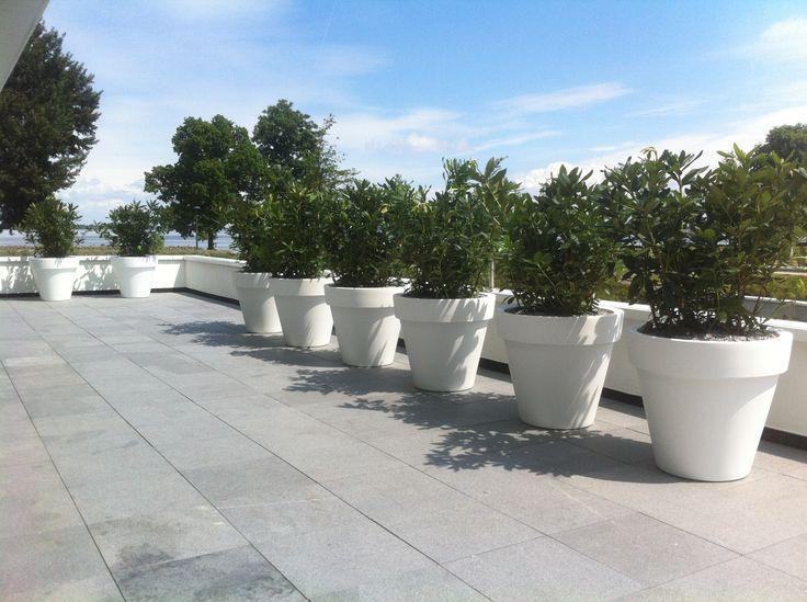 Mat witte Elho plantenbakken met fris groene Rhododendron planten!