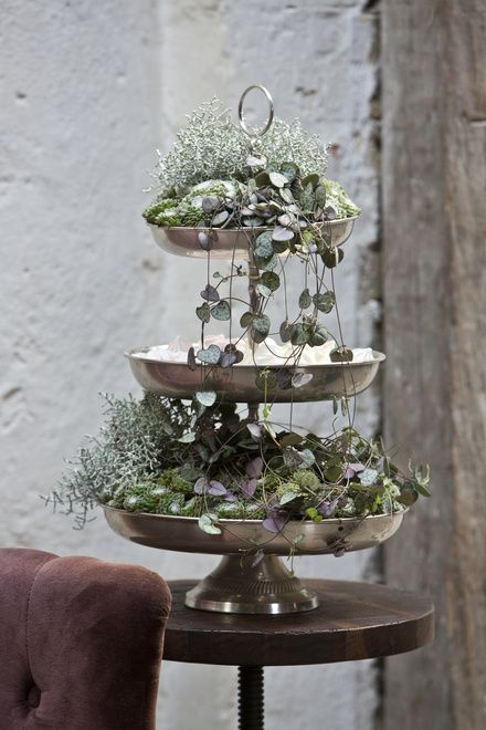 Floradania Marketing: This winter's plant trend, Tales of Flowers: Ceropegia Woodii