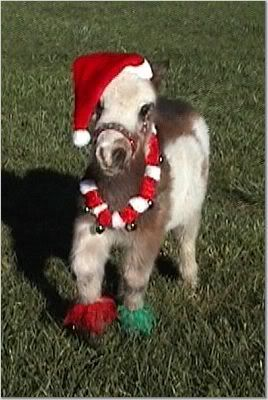 I want one to show up under my christmas tree XMAS - Miniature Horse