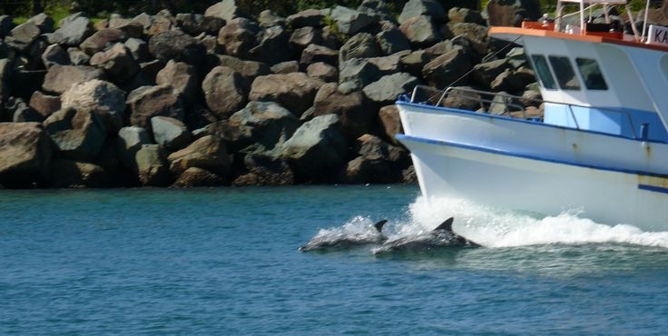 Dolphins at Forster NSW, enjoy your stay at https://www.facebook.com/pages/Mansfield-By-The-Lake-Bed-Breakfast-Forster-NSW/171100216279770 Email jill.perram@bigpond.com Ph 0265547780 M 0431734352 holiday accommodation beach lake fishing bed and breakfast swimming adults