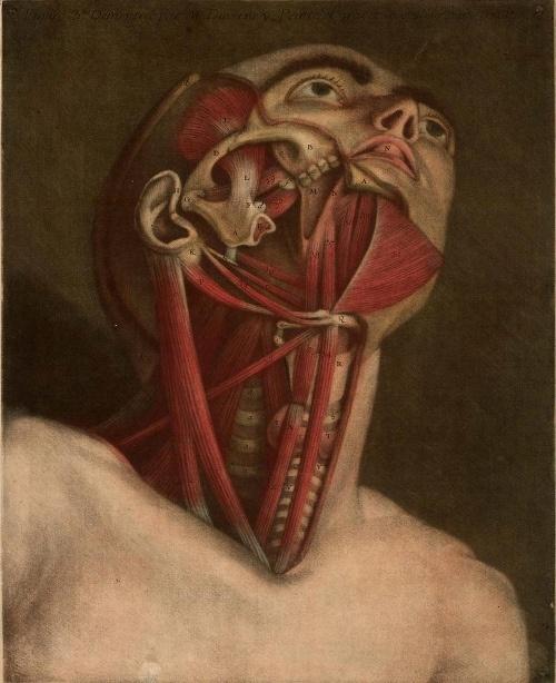 Jacques Fabien Gautier d'Agoty. Essai d'Anatomie,1754. by Public Domain Review, via Flickr