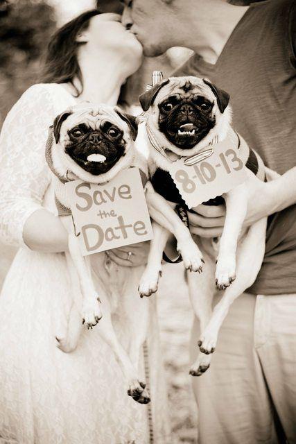 Pug save the date! OMG this is too much....