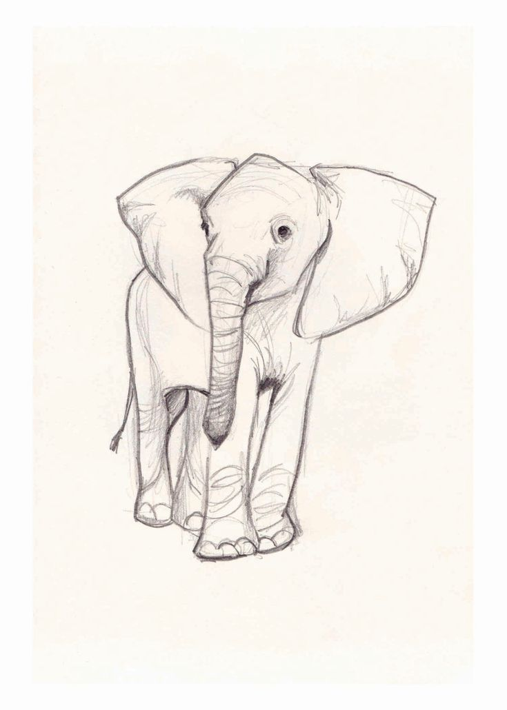 99 best dessin images on pinterest fashion illustrations water colors and acrylic paintings - Dessin elephant ...