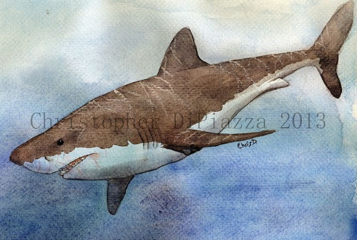 72 best Sharks/ocean images on Pinterest | Nature, Sharks and Under the sea