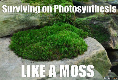 Like a Moss. Nerd humor!!!Gardens Ideas, Nerd Humor, Science Jokes, Nerd Jokes, Science Funny, Funny Stuff, Gardens Blog, Funny Science, Growing Moss