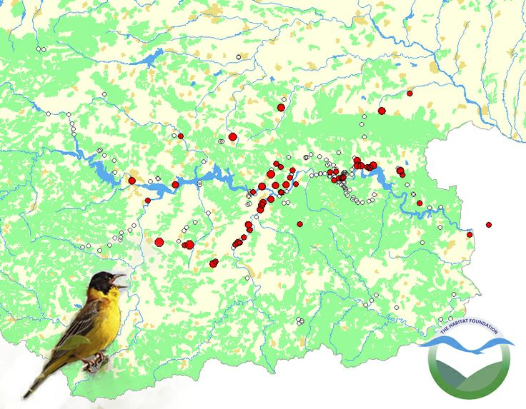 Distribution of Black-headed bunting in the Eastern Rhodopes, Bulgaria. Based on point counts by tourists.