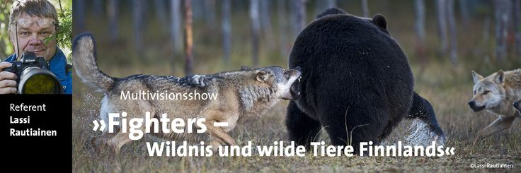 Im Osten Skandinaviens erstreckt sich ein Mosaik aus Wasser und Wald: Finnland. In den Wäldern nahe der russischen Grenze gibt es bis heute Tiere, die aus besiedelten Gebieten längst vertrieben wurden: Braunbären, Vielfraße und Wölfe streifen durch die Sümpfe, am Himmel kreisen Seeadler. Referent: Lassi Rautiainen . Termin: 05. Juni 2015  | 20.00 Uhr Vortrag in Englisch  http://www.erlebniswelt-fotografie-zingst.de/fotofestival/multivisionsshows.html