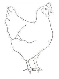 how to draw a chicken step 9