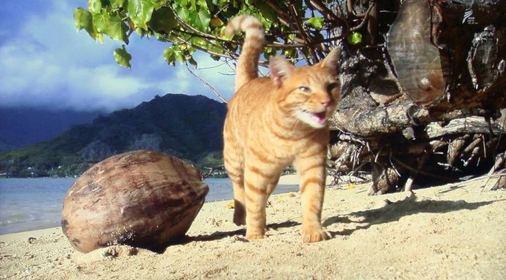 Cats in Hawaii photographed by Mitsuaki Iwago
