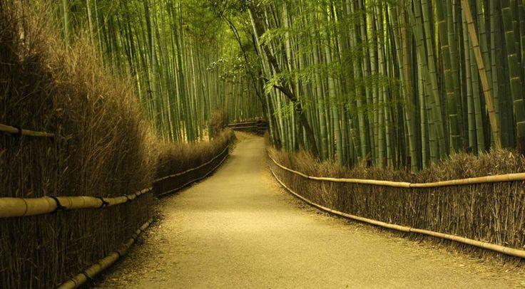 Amazing PlacesSagano Bamboo Forest, Japan - Amazing Places