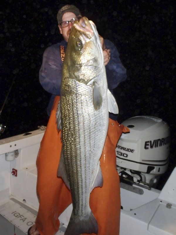 Conn. man snags striped bass records over and over