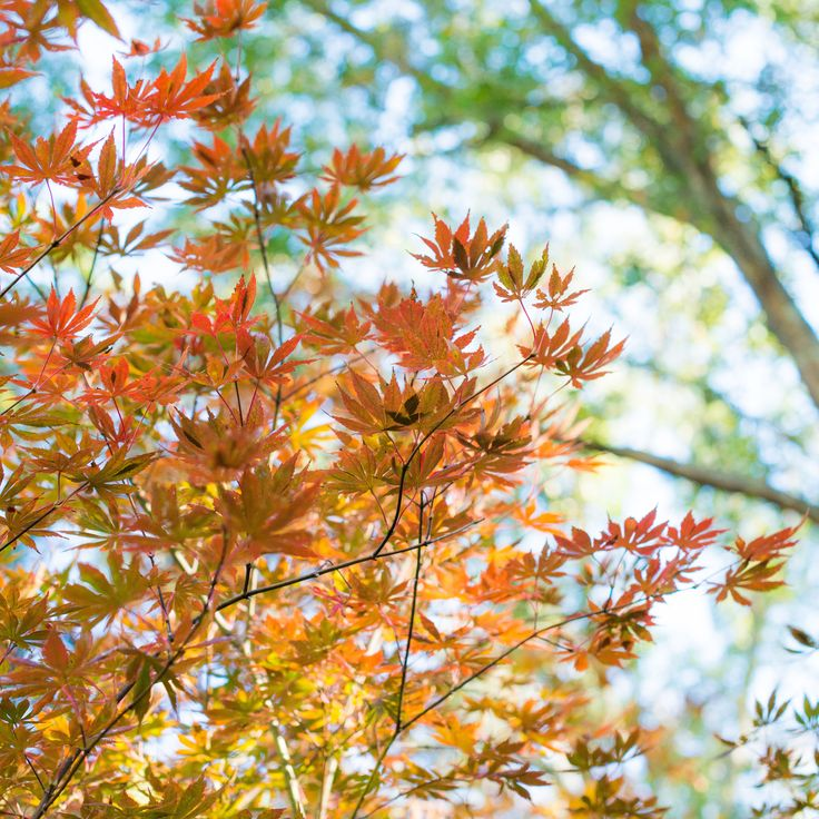 Why do leaves change colors in the fall as the