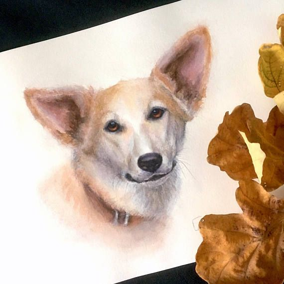 Beautiful foxy Dog original watercolour painting. Dog art