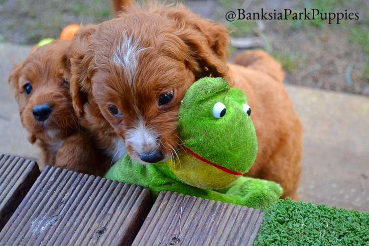 My Froggy!!