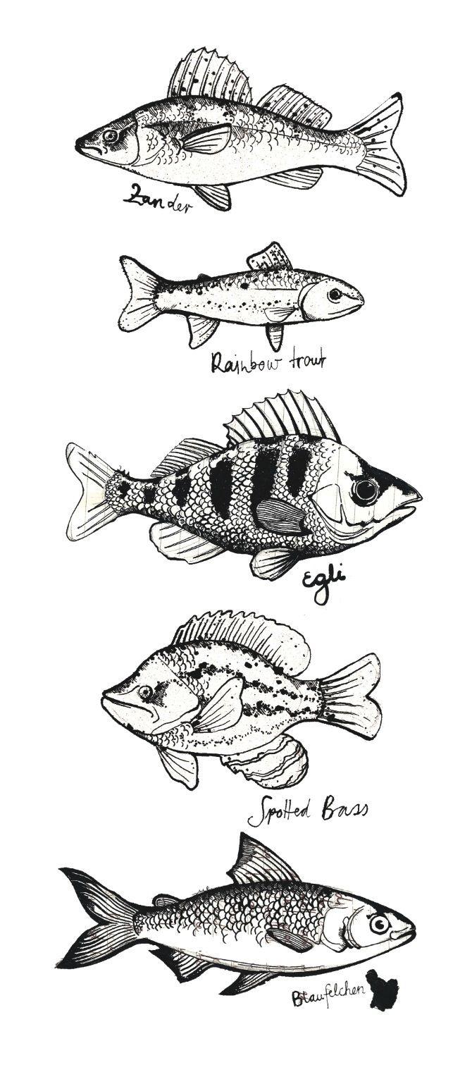 87 best Teaching Art: Underwater/Sea Life References