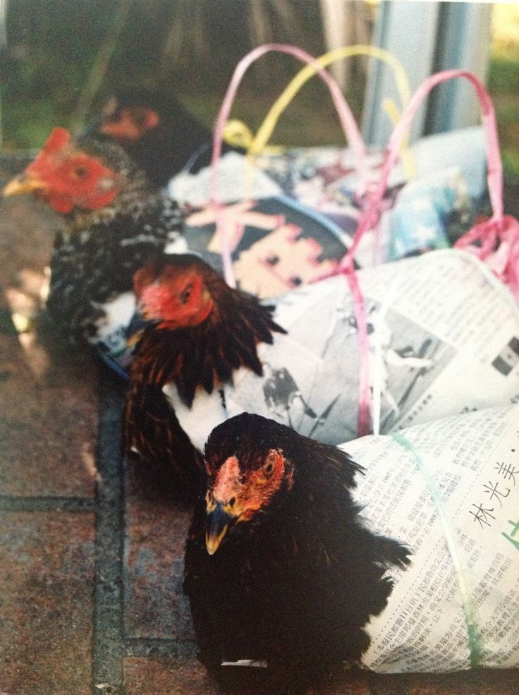 Chicken handbags - Brunei