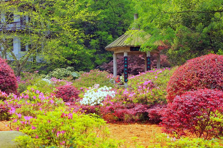 Asian gazebo in beautiful flower garden