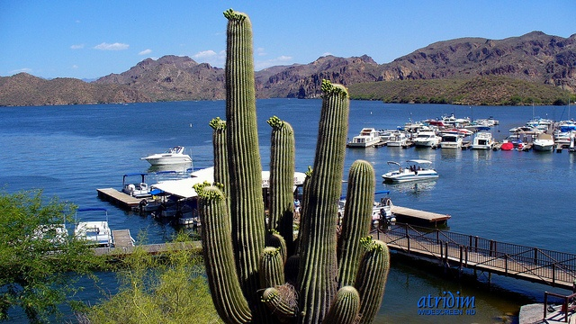 Saguaro lake arizona fed by the salt river a major water for Saguaro lake fishing