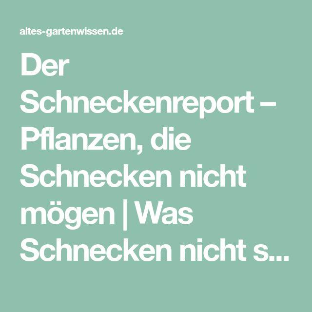 Der Schneckenreport – Pflanzen, die Schnecken nicht mögen | Was Schnecken nicht schmeckt | altes-gartenwissen.de