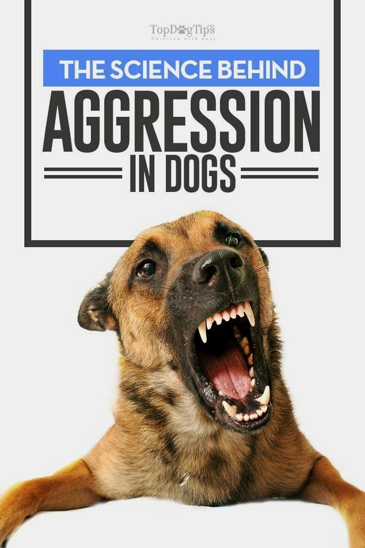 The Science Behind Aggression In Dogs Dog Training Dog Training