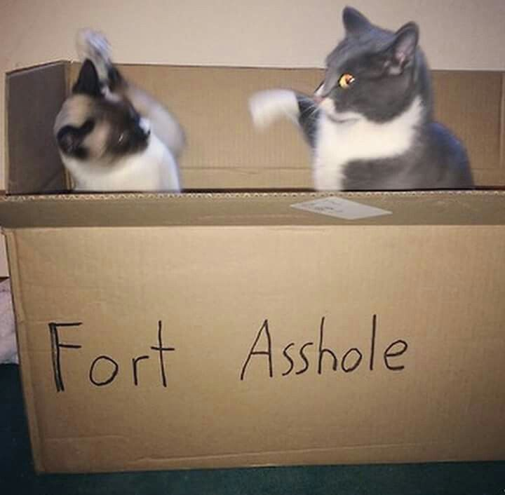 I know of two little boys who could use this fort