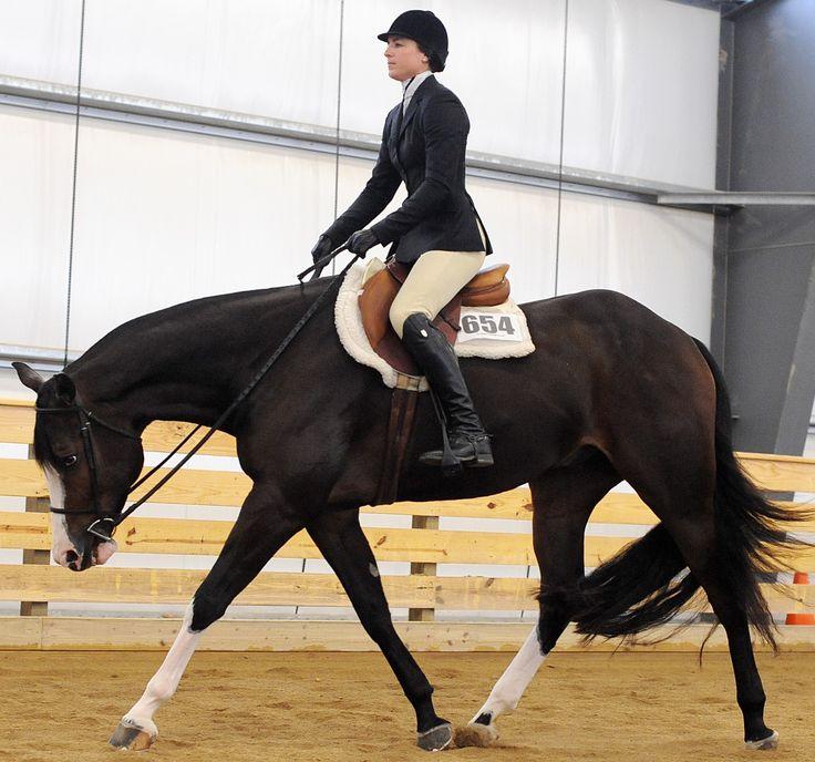 Gorgeous Hunter under saddle horse