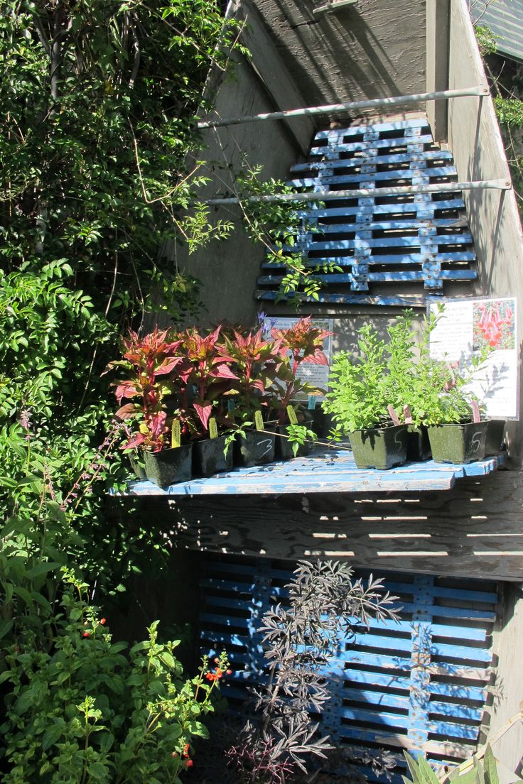 Another example of JM using recycled stuff, like this old row boat, to display plants for sale in!!
