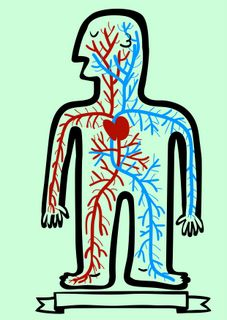 Essential oils used for poor circulation will stimulate blood flow in the veins, lymph movement in the lymphatic system and help shift the toxin build up throughout your body. - See more at: http://www.healingessentially.com/poor-circulation.html#sthash.RpvTBxb1.dpuf