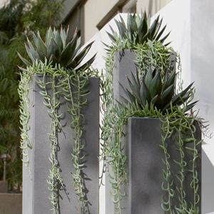 Metal containers with Agave 'Blue Glow' and trailing Senecio radicans. Would work in the landscape where the tall shrub died in the backyard in AZ.