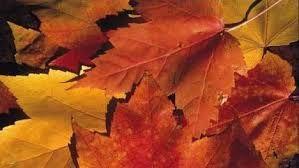 Afbeeldingsresultaat voor vallende bladeren