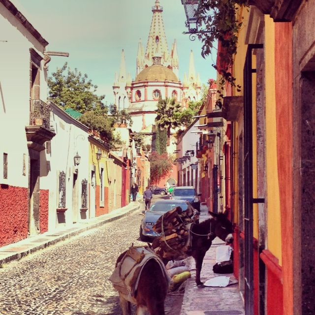 Donkeys and cathedrals in San Miguel de Allende mexico, anahata katkin
